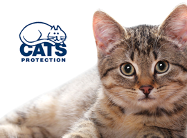 Cats Protection Website Designed by InForm Web Design