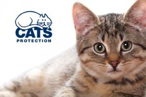 Cats Protection - Client Profile - InForm Web Design