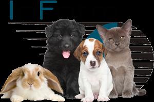 Animal Welfare Charity Website Design | InForm Web Design